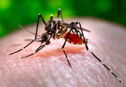 Life Insurance and Zika Disease - Mosquito